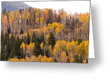 Colorado Fall Foliage Greeting Card