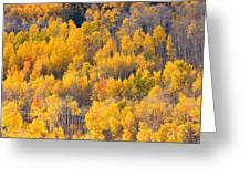 Colorado High Country Autumn Colors Greeting Card