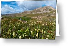 Colorado Late Summer Splendor Greeting Card