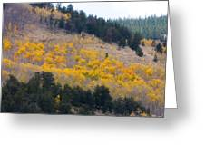 Colorado Mountain Aspen Autumn View Greeting Card