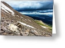 Colorado Mountain Goat Greeting Card