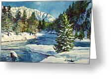 Colorado Pines Greeting Card by David Lloyd Glover