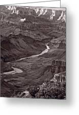 Colorado River At Desert View Grand Canyon Greeting Card