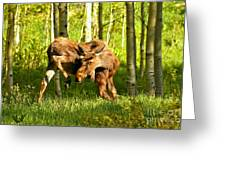 Colorado Rockies Moose Greeting Card