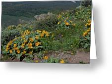 Colorado Spring Wildflower And Mountain Portrait Greeting Card by Cascade Colors