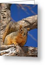 Colorado Squirrel Standoff Greeting Card