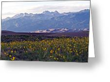 Colorado Style Landscape Sunflowers On The Sangre De Cristos Greeting Card by Scotts Scapes