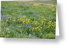 Colorado Summer Color Greeting Card