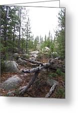 Colorado Trees Greeting Card