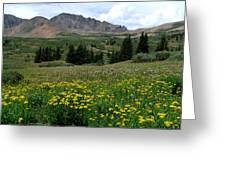 Colorado Wildflower Spectrum Greeting Card