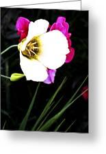 Colorado Wildflower1 Greeting Card