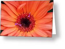 Colorburst Greeting Card