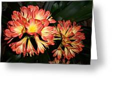 Colorburst Greeting Card