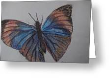 Colored Butterfly Greeting Card