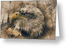 Colored Etching Of American Bald Eagle Greeting Card