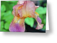 Colored Iris  Greeting Card