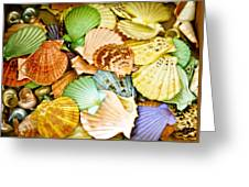 Colored Shells Greeting Card