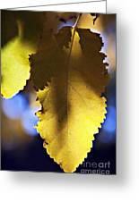 Colorful Autumn Leaf Greeting Card