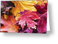 Colorful Autumn Leaves Closeup Greeting Card