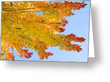 Colorful Autumn Reaching Out Greeting Card