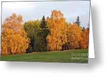 Colorful Autumn - Trees In Autumn Greeting Card
