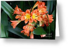 Colorful Beauties Greeting Card by Donna Parlow