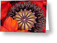 Colorful Bloom Greeting Card