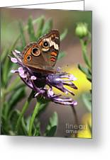 Colorful Butterfly On Daisy Greeting Card