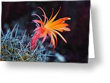 Colorful Cactus Flower Greeting Card