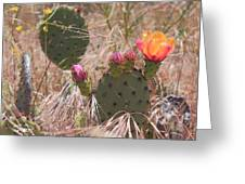 Colorful Cactus Greeting Card