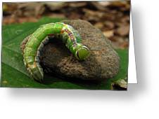 Colorful Caterpillar  Greeting Card