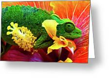 Colorful Chameleon Greeting Card
