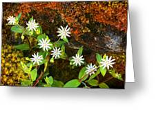 Colorful Chickweed Greeting Card