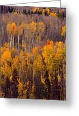 Colorful Colorado Autumn Landscape Vertical Image Greeting Card