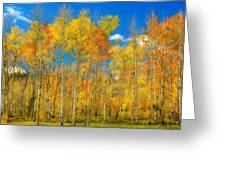 Colorful Colorado Fall Foliage Greeting Card
