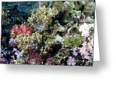 Colorful Coral Reef Greeting Card