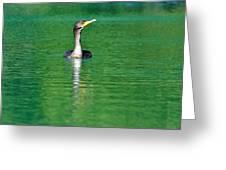 Colorful Cormorant Greeting Card