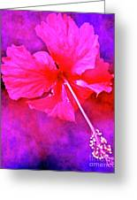 Colorful Cosmic Flower-hibiscus Greeting Card
