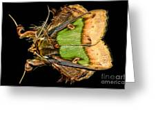 Colorful Cryptic Moth Greeting Card