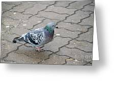 Colorful Dove Greeting Card