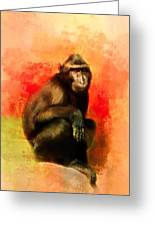 Colorful Expressions Black Monkey Greeting Card