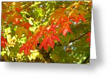 Colorful Fall Leaves Red Nature Landscape Baslee Troutman Greeting Card