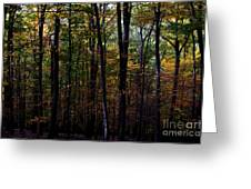 Colorful Fall Season Greeting Card