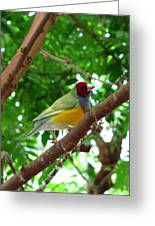 Colorful Finch Greeting Card