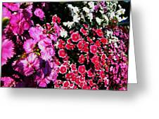 Colorful Flowers. Greeting Card