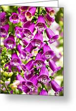 Colorful Foxglove Flowers Greeting Card