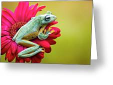 Colorful Frog Greeting Card