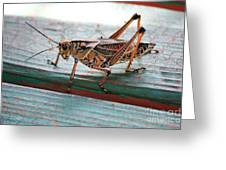 Colorful Grasshopper Greeting Card