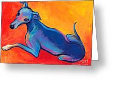 Colorful Greyhound Whippet Dog Painting Greeting Card by Svetlana Novikova