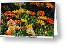 Colorful In The Garden  Greeting Card